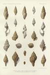 &lt;B&gt;Dautzenberg, Ph.; Fischer, H.&lt;/B&gt; (1906). Mollusques provenant des dragages effectués à l'ouest de l'Afrique pendant les campagnes scientifiques de S.A.S. le Prince de Monaco. <i>Résultats des Campagnes Scientifiques Accomplies sur son Yacht par Albert