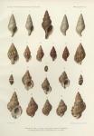 Dautzenberg, Ph.; Fischer, H. (1906). Mollusques provenant des dragages effectués à l'ouest de l'Afrique pendant les campagnes scientifiques de S.A.S. le Prince de Monaco. Résultats des Campagnes Scientifiques Accomplies sur son Yacht par Albert
