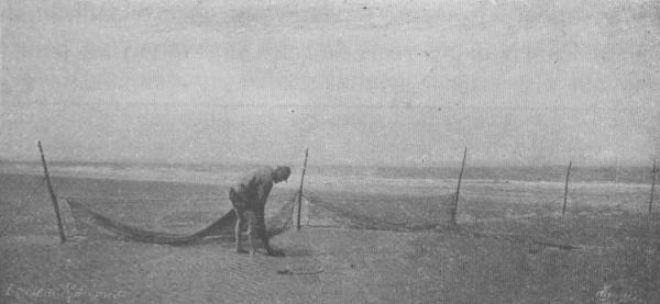 De Zuttere (1909, fig. 32)