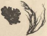 Mossen, korstmossen en paddestoelen