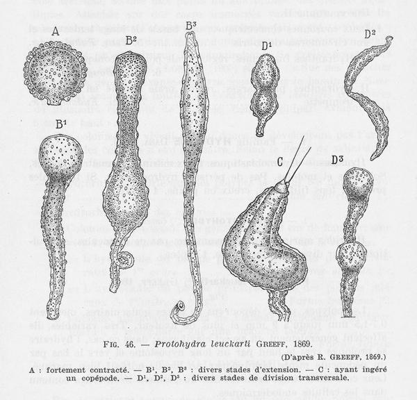 Leloup (1952, fig. 46)