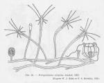 &lt;B&gt;Leloup, E.&lt;/B&gt; (1952). Coelentérés. <i>Faune de Belgique</i>. Institut royal des Sciences naturelles de Belgique: Brussel. 283 pp.