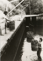 RUG - Laboratory for Mariculture