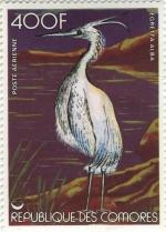 Egretta alba
