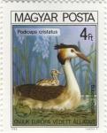 Podiceps cristatus