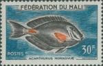 Acanthurus monroviae