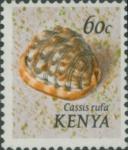 Cassis rufa