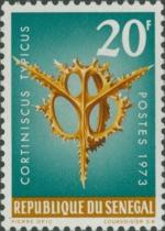 Cortiniscus typicus