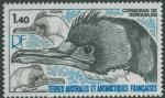 Phalacrocorax verrucosus