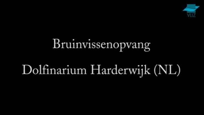 VIDEO: Bruinvissenopvang Dolfinarium Harderwijk (Nederland)