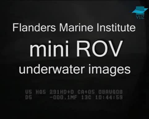VIDEO: Onderwaterbeelden met mini-ROV