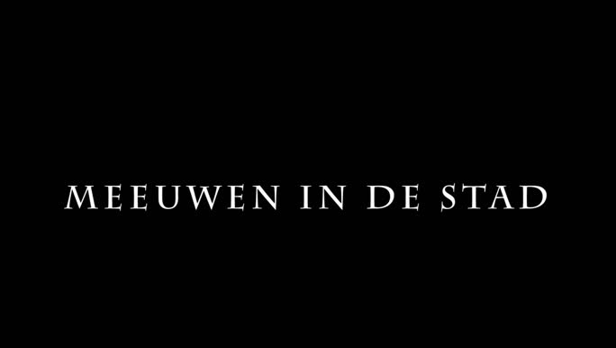 VIDEO: Meeuwen in de stad