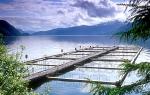 Aquacultuurproducten