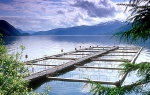 Type aquacultuur