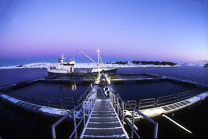 Kweekinstallatie Marine Harvest
