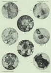 &lt;B&gt;Sistek, D.&lt;/B&gt; (1912). Géologie: Petrographische Untersuchungen der Gesteinsproben, II Teil. <i>Résultats du Voyage du S.Y. <i>Belgica</i> en 1897-1898-1899 sous le commandement de A. de Gerlache de Gomery: Rapports Scientifiques (1901-1913)</i>. Busch