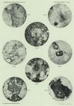 Sistek, D. (1912). Géologie: Petrographische Untersuchungen der Gesteinsproben, II Teil. Résultats du Voyage du S.Y. Belgica en 1897-1898-1899 sous le commandement de A. de Gerlache de Gomery: Rapports Scientifiques (1901-1913). Busch