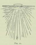Arctowski (1902, fig. 11)