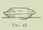Arctowski (1902, fig. 15)