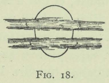 Arctowski (1902, fig. 18)
