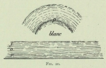 Arctowski (1902, fig. 20)