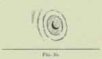 Arctowski (1902, fig. 30)