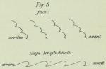 Dobrowolski (1903, appx. fig. 3)