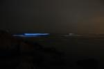 Zeevonk: oplichten van de zee