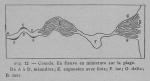 Rahir (1928, fig. 12)