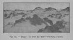 Rahir (1928, fig. 56)