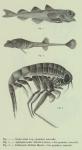 Fauna & flora van de zee