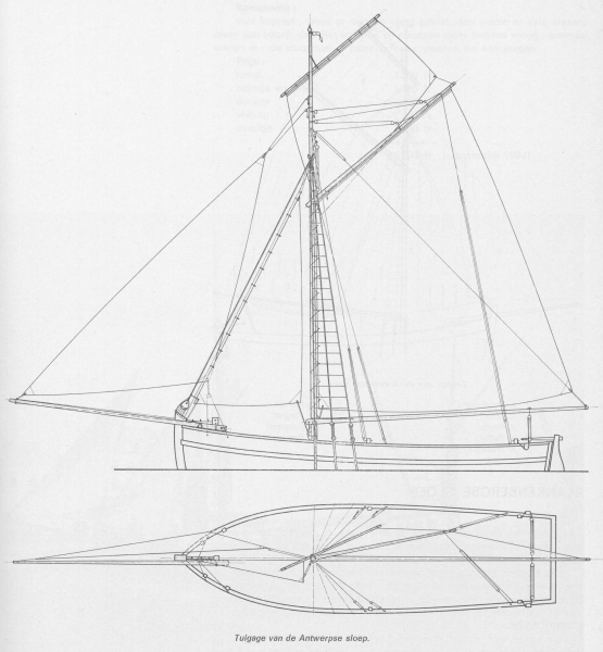 Desnerck (1976, fig. 157)