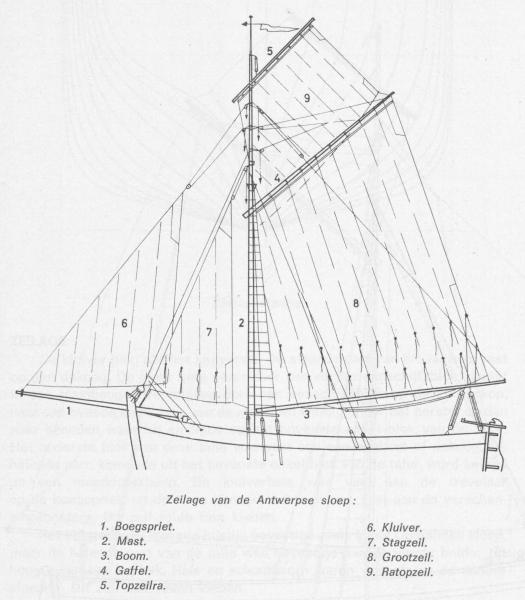 Desnerck (1976, fig. 158)