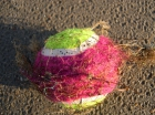 tennisbal + zeedraad