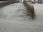 geblazen zandfiguur, author: Nuyttens, Filip