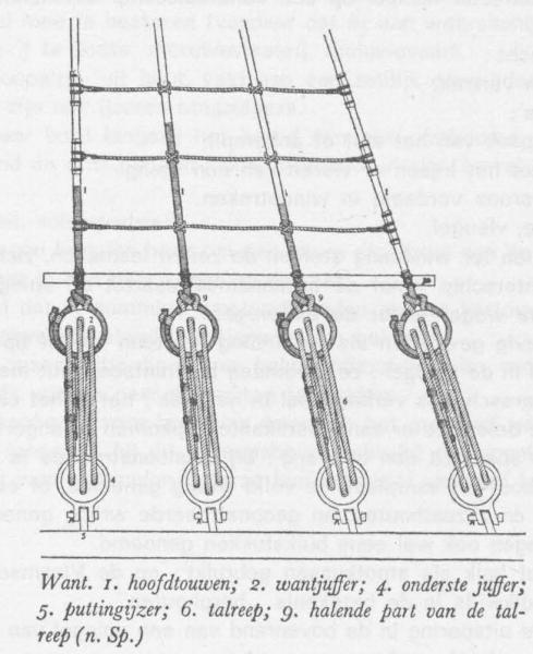 Desnerck (1976, fig. 509)