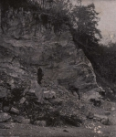 Gilson (1914, fig. 010)