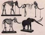 &lt;B&gt;Gilson, G.&lt;/B&gt; (1914). Le Musée Royal d'Histoire Naturelle moderne, sa mission, son organisation, ses droits. <i>Mémoires du Musée Royal d'Histoire Naturelle de Belgique = Verhandelingen van het Koninklijk Natuurhistorisch Museum van België</i>, VII(25