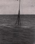 Gilson (1914, fig. 142)