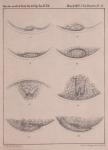 Van Beneden (1861, pl. 09)