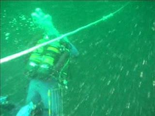 Belgian shipwrecks: hotspots for marine biodiversity