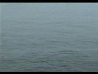 Witsnuitdolfijnen in de Noordzee