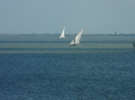 Nile delta field trip