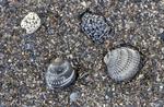 VLIZ website: Aardwetenschappen: Paleontologie