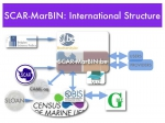 SCAR-MarBIN International Structure