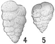 Textularia agglutinans, author: Cedhagen, Tomas