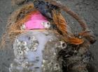 zeepokken