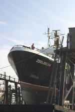 Onderhoud zeeleeuw