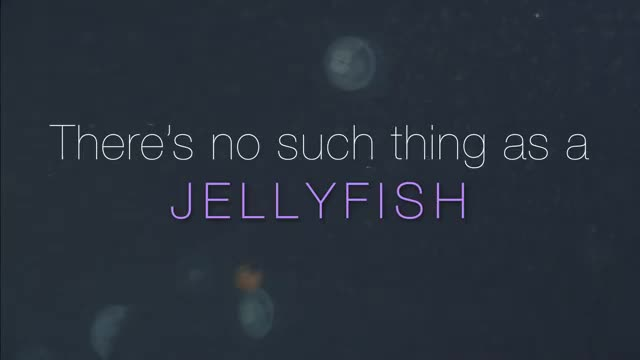 VIDEO: There's no such thing as a jellyfish (English)