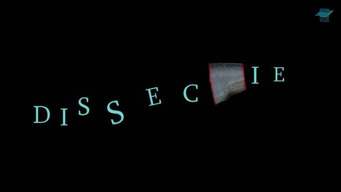 VIDEO: Dissectie haring